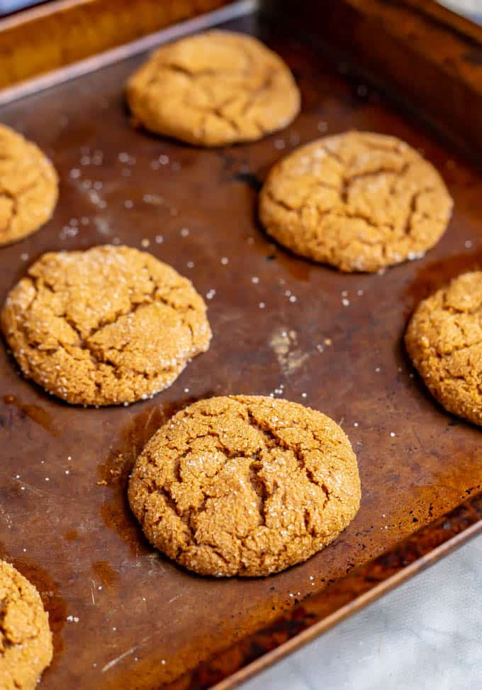 Close up of old fashioned soft molasses cookies on a baking tray