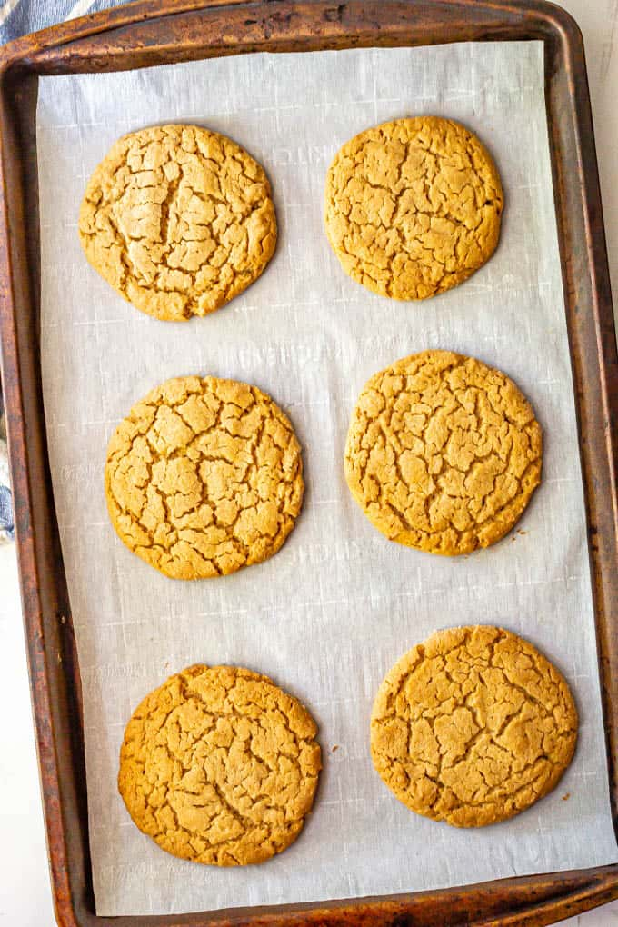 Large peanut butter cookies on a parchment lined baking sheet after being baked