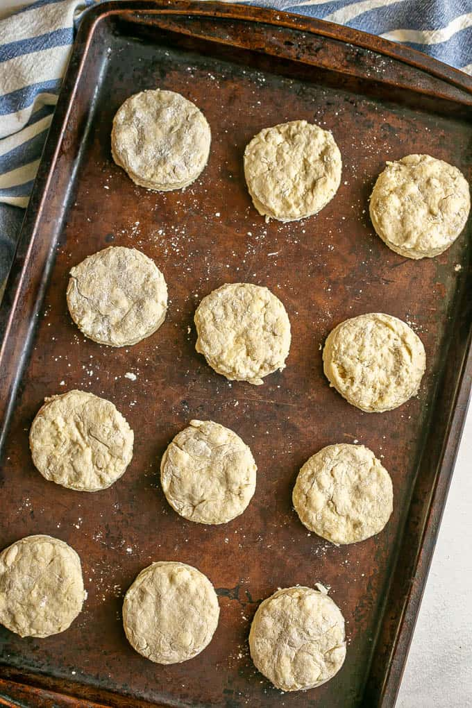 A dozen biscuits in rows on a baking sheet before being cooked