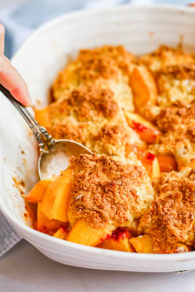 A serving spoon lifting a scoop of fresh peach cobbler out of a white casserole dish